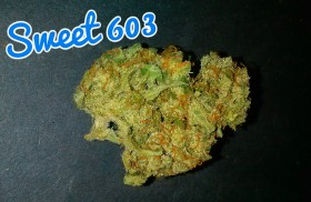 My Favorite Strains: Sweet 603