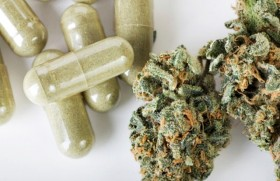 Australian Study Reports Efficacy of Cannabis for Pain Therapy