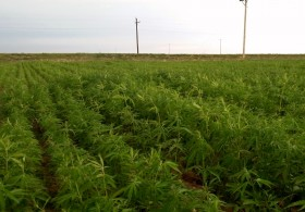 Colorado Cannabis Firm to Grow on California Tribal Lands