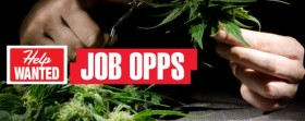 DPA Report: Employment Rates Rise Due to CO Cannabis Legalization
