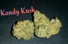 My Favorite Strains: Kandy Kush