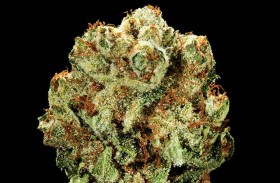 My Favorite Strains: Top Five of 2014