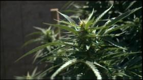 Northern California Tribe Plans Marijuana Farm