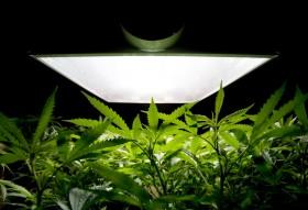 Judge Weighs Whether U.S. Marijuana Law Is Unconstitutional