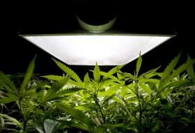 Medical Marijuana May Soon Be Marketed as Kosher