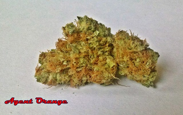 My Favorite Strains: Agent Orange, Source: Original Photography by Phe Harpha