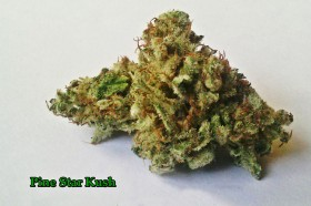 My Favorite Strains: Pine Star Kush