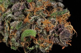 My Favorite Strains: Shaman