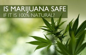 New Study Supports What We All Knew: Cannabis Is the Safest Drug