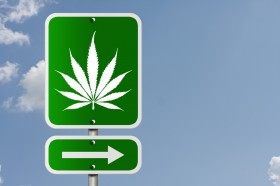 Study: Cannabis Doesn't Lead to Increased Car Accidents