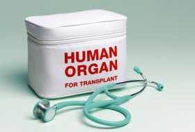 Cannabis and Organ Transplants: Who is Worthy?