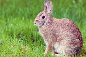 DEA Warns of Stoned Rabbits if Utah Passes Medical Marijuana