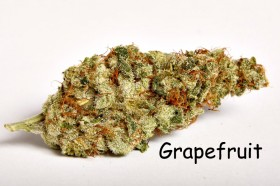 My Favorite Strains: Grapefruit