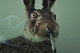 Stoned Rabbits: The DEA's Latest Fear Mongering Tactic