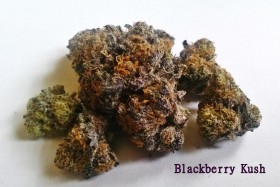 My Favorite Strains: Blackberry Kush