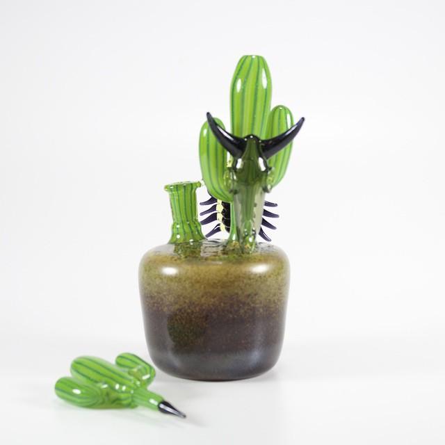 Instafire: Darby Holm Cactus, Source: https://instagram.com/darbyholm