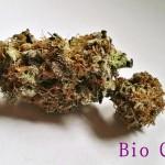 My Favorite Strains: Bio Chem, Source: Original photography for Weedist.com by Phe Harpha
