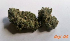 My Favorite Strains: Goji OG