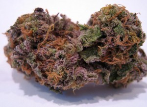 My Favorite Strains: Top 6 Best Tasting, Source: http://www.mjspectator.com/strains/primetime_gdp_june.jpg