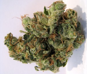My Favorite Strains: Top 6 Best Tasting, Source: http://www.ourweed.com/wp-content/uploads/2010/02/nyc_diesel_02.jpg