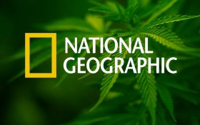 National Geographic Dedicates Cover to Cannabis