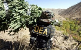 New DEA Chief Claims He Will Not Focus on Marijuana