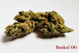 My Favorite Strains: Raskal OG