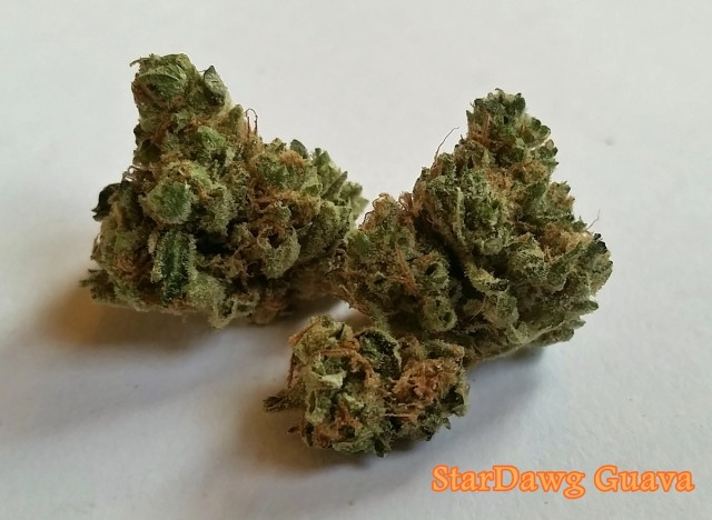 My Favorite Strains: Stardawg Guava, Source: Original photo for Weedist.com by Phe Harpha