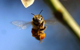 New Study: Honeybees Will Replace Drug-Sniffing Dogs