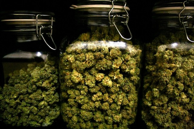 Image result for curing cannabis